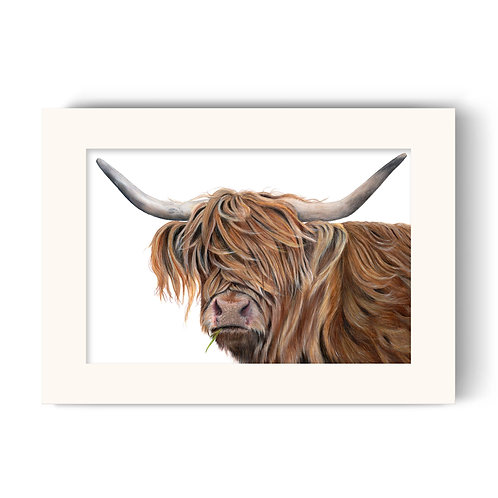 Highland Cow Print - Toffee the Highland Cow