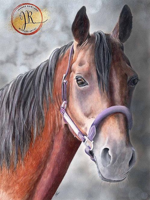 Vimto - Horse