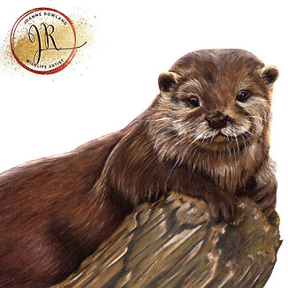 Otter in Coloured Pencil