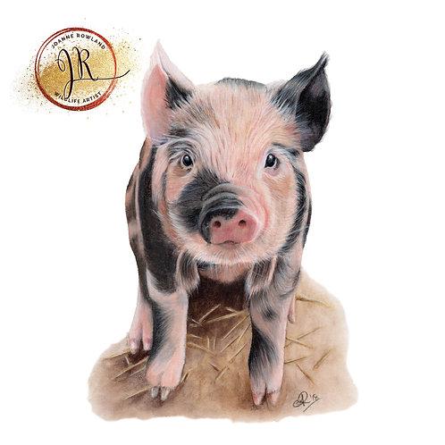 Portia the Piglet