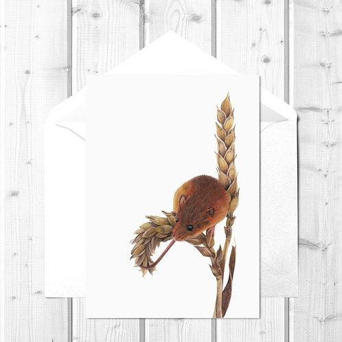 Mouse Fine Art Card - Harvey the Harvest Mouse