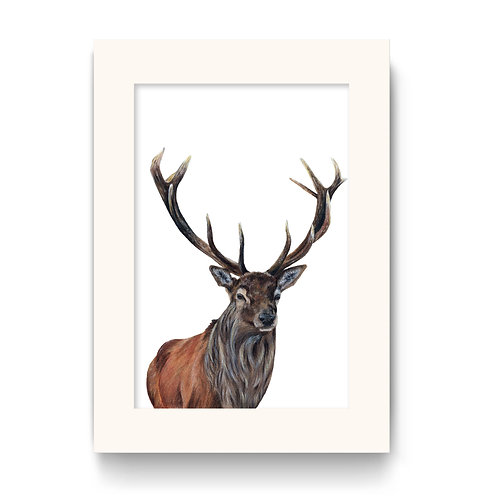 Stag Print - Big Red