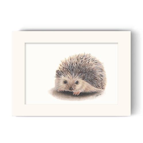 Hedgehog Print - Huggy the Hedgehog