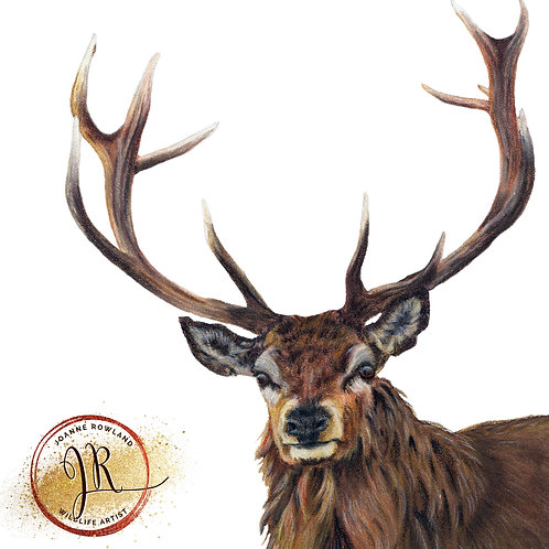 Reg the Regal Stag