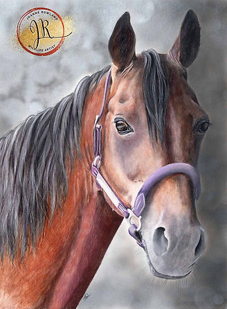 Horse in coloured pencil