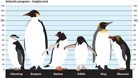 Antarctica - 11_20 - Abel Birchfield.jpg