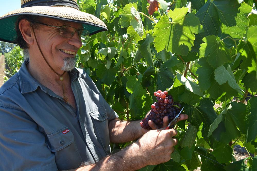 Howard Anderson, Winemaker.