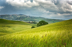 Another storm brewing in Tuscany