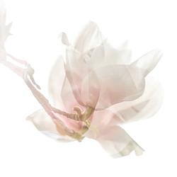 Dancing Magnolias