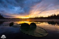 morrisey lake lilly sunset