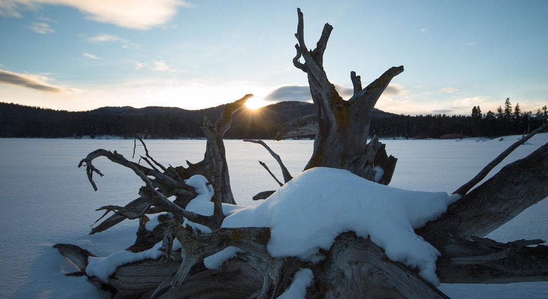 Snowy stump. Phone or Desktop background.