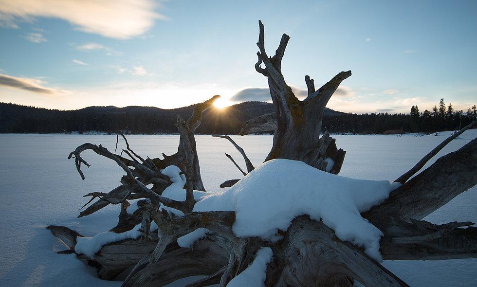Winter stump sunstar.