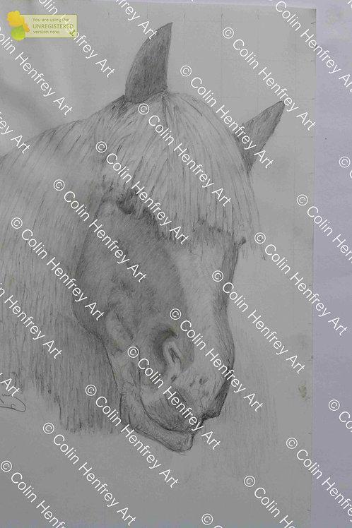 P1010520 - Horses Mane