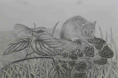Harvet Mouse on Blackberries