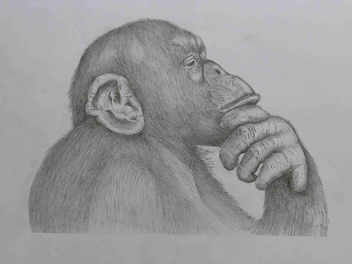 The Thinking Ape - A3
