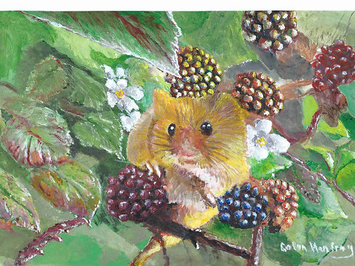 Harvest Mouse on a Blackberry Bush