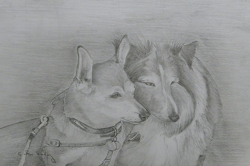 My 2 dogs