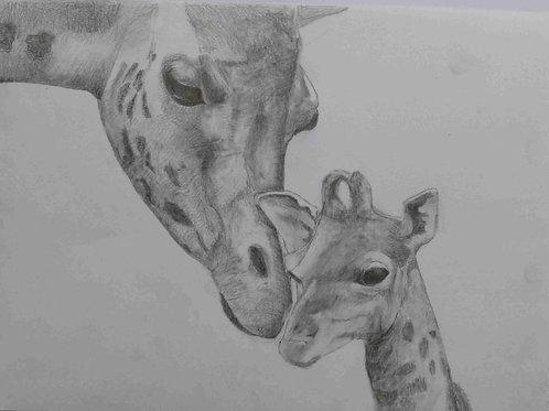 Giraffe and calf - A3 Print