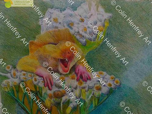 P1010786 -Harvest Mouse