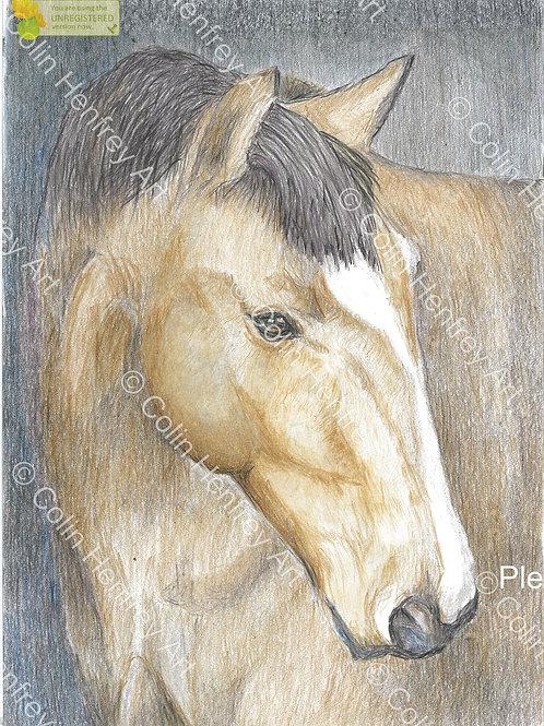 P1000013 - Brown Horse