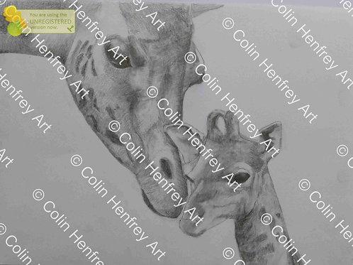 P1010532- Giraffe and calf