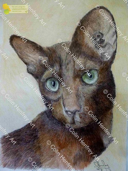 P1010825 - Meya the cat