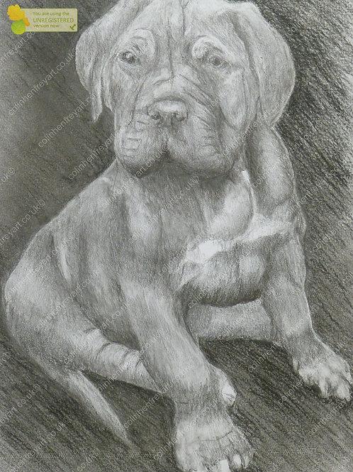 P1010590 - Puppy Dog