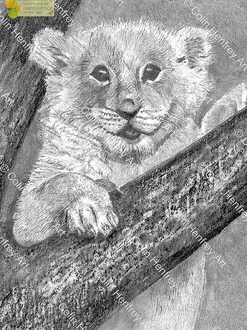 P1010765 -Lion Cub