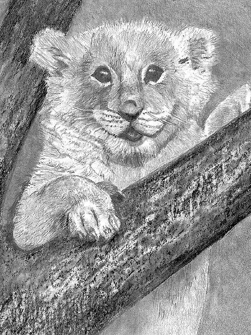 """Lion Cub - 8.1/4"""" x 9"""""""