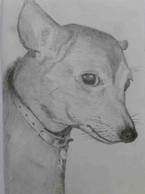 Mollie the Dog