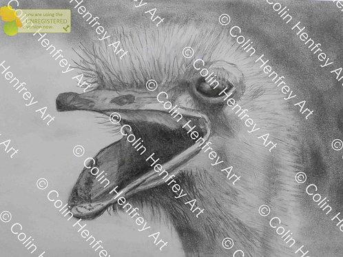 P1010530 - Ostrich