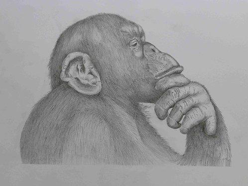 The Thinking Chimpanzee