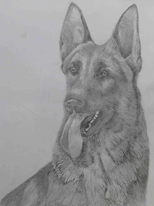 German Shepherd Dog - A3