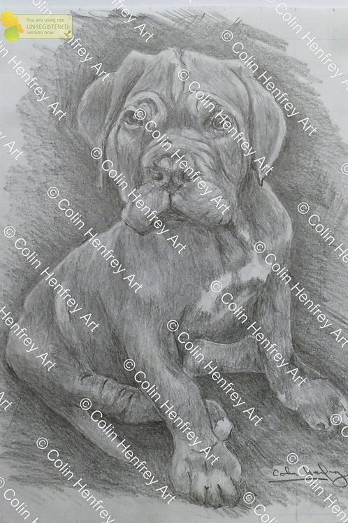 P1010525 - Puppy Dog