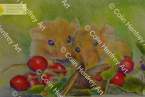 P1010782 - Harvest Mice