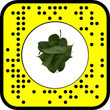 FOREST SNAPCODE