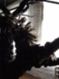 Budding Grove 5.JPG