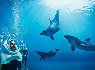 DolphinBay-Lifestyle-DolphinTrekFriends.