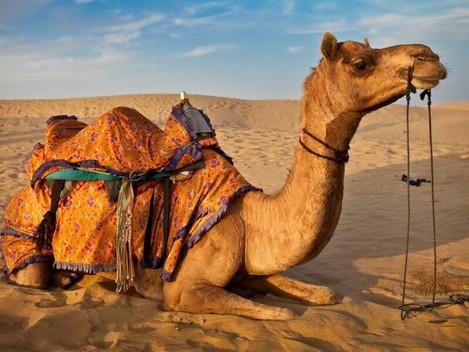 MORNING DESERT SAFARI
