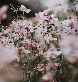 front_flowers.jpg