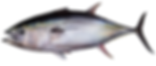 yellowfin_tuna.png