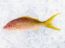 yellowtail-snapper-three-fish-wild-clean