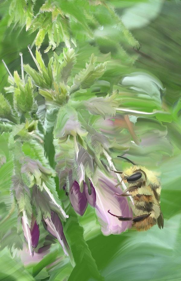 Comfrey Bee.jpg