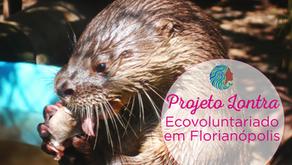 Projeto Lontra – Ecovoluntariado e turismo em Florianópolis