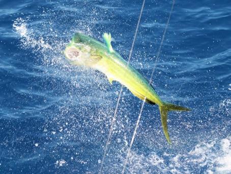 Florida Keys Fishing Frenzy