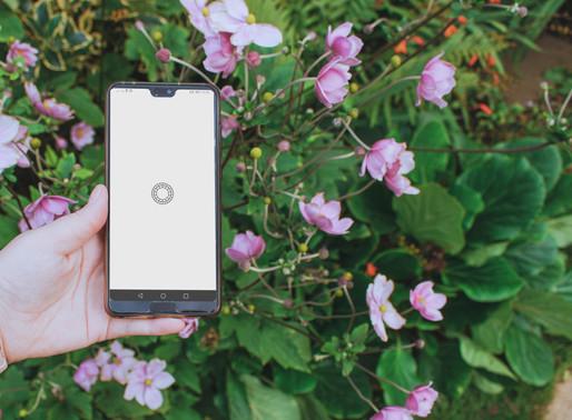Basic Image Editing On Your Phone Using VSCO