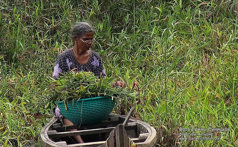 Местные жители вдоль озер недалеко от Кочи, Керала, Индия