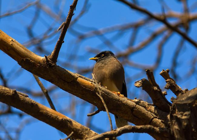 Птички в Дели
