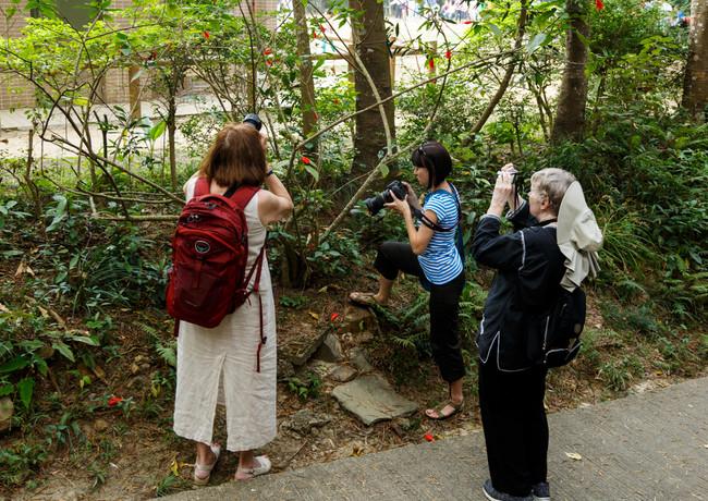 Фототурщики за съёмкой гонконгского паука