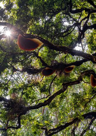 Древесные грибы в Муннаре, Керала, Индия